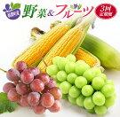 【ふるさと納税】新鮮おいしい『野菜&フルーツ』定期便(全3回)