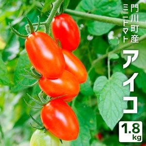 【ふるさと納税】AK-1 門川町産ミニトマト アイコ1.8kg