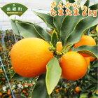 【ふるさと納税】きんかんたまたま2キロ2kgA2Lサイズ金柑柑橘果物フルーツ国産九州産宮崎県産送料無料