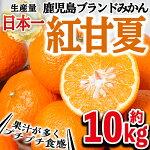 紅甘夏【10kg】【鹿児島いずみ農業協同組合】2-23