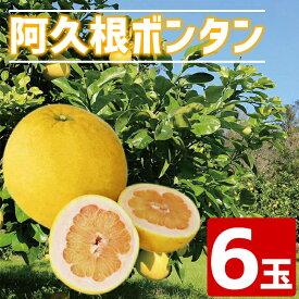 【ふるさと納税】【期間限定】<ご予約受付中!2020年12月15日〜2021年2月15日の間に発送予定>阿久根ぼんたん(Lサイズ・6玉入)柑橘の王様とよばれるボンタン!実の大きな柑橘で粒が大きくシャキシャキ食感!【泰平食品】2-4