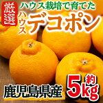 ハウスデコポン【5kg】【鹿児島いずみ農業協同組合】3-8