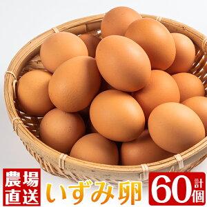 【ふるさと納税】農場直送!いずみ卵(60個入り)発送当日に採卵された新鮮なたまごをお届け!【浦本養鶏】