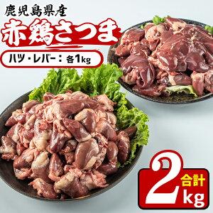 【ふるさと納税】鹿児島県産鶏肉!赤鶏さつまハツ・レバー(合計2kg)美味しくてシャキッとした歯応え!【Scale-UP】