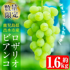 【ふるさと納税】≪数量限定≫ロザリオビアンコ(計1.6kg)酸味の少ないすっきりした甘さの美味しいブドウ♪【山門ぶどう園】