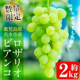 【ふるさと納税】≪数量限定≫ロザリオビアンコ(計2kg)酸味の少ないすっきりした甘さの美味しいブドウ♪【山門ぶどう園】
