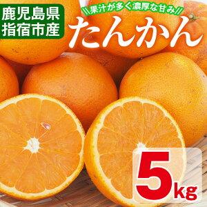 【ふるさと納税】<期間限定・数量限定>鹿児島県指宿市産のみかん!開聞たんかん(5kg)果汁が多く濃厚な甘みが特徴のミカン!国内産オレンジの異名を持つタンカンは酸味とのバランスも