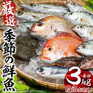 【ふるさと納税】<指宿産直便>漁師が選ぶ季節の鮮魚便お試しセット(3〜6種・合計3kg)ご家庭で旬の美味しいお魚を♪【指宿山川水産合同会社】