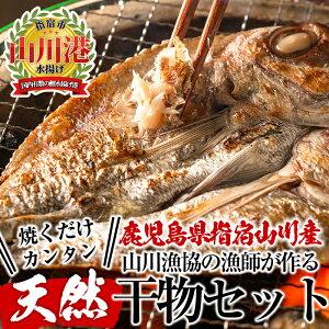 【ふるさと納税】指宿市山川漁協の漁師が作った美味しい干物(5種・計11枚)新鮮な魚と産地ならではの素材を使用!【指宿山川水産合同会社】