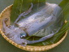 【ふるさと納税】水イカ(アオリイカ):半身:処理済(ワタヌキ)