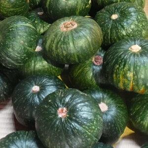 【ふるさと納税】種子島産 ほくほくかぼちゃ(くりゆたか)10kg