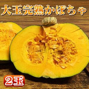 【ふるさと納税】種子島産の大玉かぼちゃ 3kg以上×2個【順次発送中】