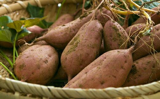 【ふるさと納税】種子島中園ファームの熟成安納芋(生芋)Mサイズ10kg