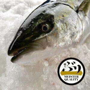 【ふるさと納税】冷蔵ぶり1尾鹿児島県産 養殖生産量日本一刺身 焼き物 煮物 しゃぶしゃぶに