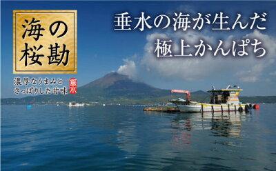【ふるさと納税】『海の桜勘』よくばりコース