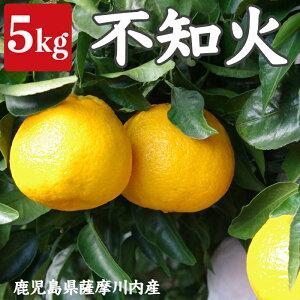 【ふるさと納税】不知火5kg[季節限定] しらぬい しらぬひ 鹿児島県産 みかん 柑橘 柑橘類