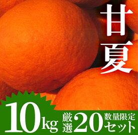 【ふるさと納税】《期間限定!2021年4月1日〜4月末の間に発送予定》【数量限定】柑橘の甘夏(あまなつ)(10kg・L〜3L:18個〜35個)爽やかなミカン!【つとむじぃグレープの森】