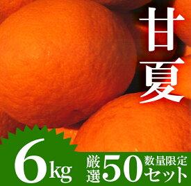 【ふるさと納税】《期間限定!2021年4月1日〜5月末の間に発送予定》【数量限定】柑橘の甘夏(あまなつ)(6kg)爽やかなミカン!【つとむじぃグレープの森】