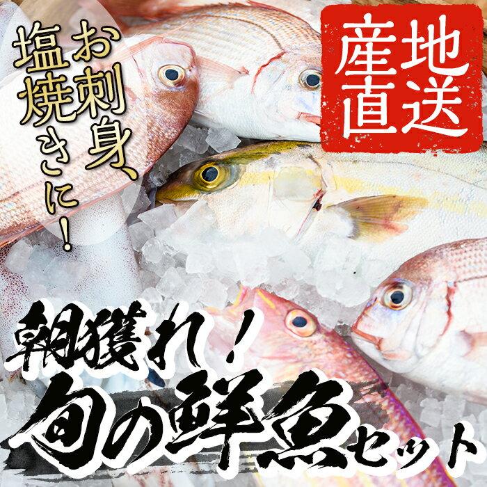 【ふるさと納税】朝獲れ鮮魚の詰め合わせセット!鹿児島県いちき串木野より海鮮を産地直送【えびす市場】