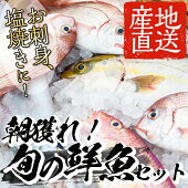 【ふるさと納税】海の幸鮮魚詰合せ【市来えびす市場】