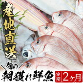 【ふるさと納税】旬の朝獲れ鮮魚コース2ヵ月定期便!その日獲れたての鮮魚や活魚!漁協だからできる産地直送の定期便【えびす市場】