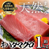 【ふるさと納税】天然・旬の本まぐろ約1kg【海鮮まぐろ家】