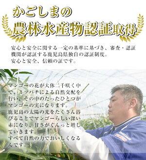 【ふるさと納税】マンゴー2玉