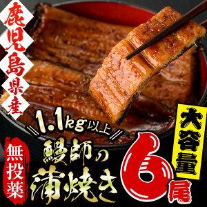 【ふるさと納税】日本初!無投薬で育った鰻師の蒲焼<特大...