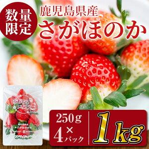 【ふるさと納税】数量限定!鹿児島県産さがほのか(いちご 250g×4パック 合計1kg)果汁が多いジューシーイチゴ♪酸味少なめ 甘さすっきり!香りの強い苺です【JAあおぞら】a5-067