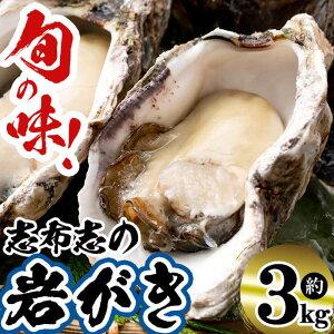 【ふるさと納税】【期間限定】今が旬!サイズおまかせ!!志布志の岩がき 約3kg 志布志湾で漁師が手間暇かけて育てた濃厚な味わいの岩牡蠣!紫外線殺菌海水で生食も安心!カキフライや