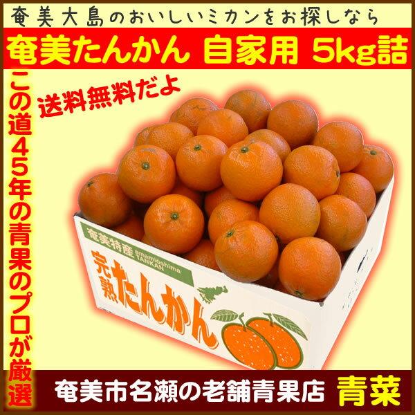 【ふるさと納税】奄美たんかん自家用5kg箱詰【送料無料】
