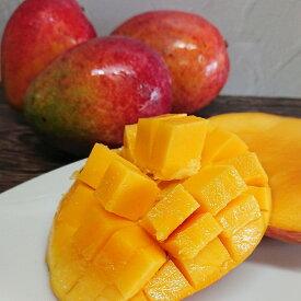 【ふるさと納税】奄美の完熟マンゴ−(訳あり)約1kg