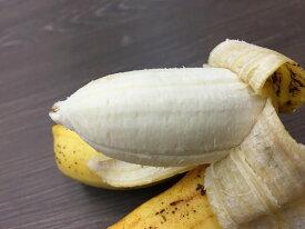 【ふるさと納税】島バナナ500g入り2パック(約1kg)