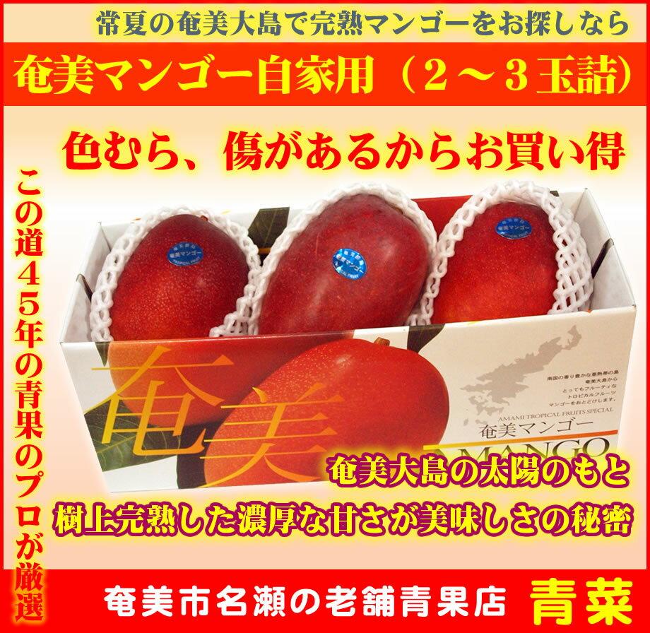 【ふるさと納税】奄美マンゴー自宅用(2〜3玉詰)【送料無料】