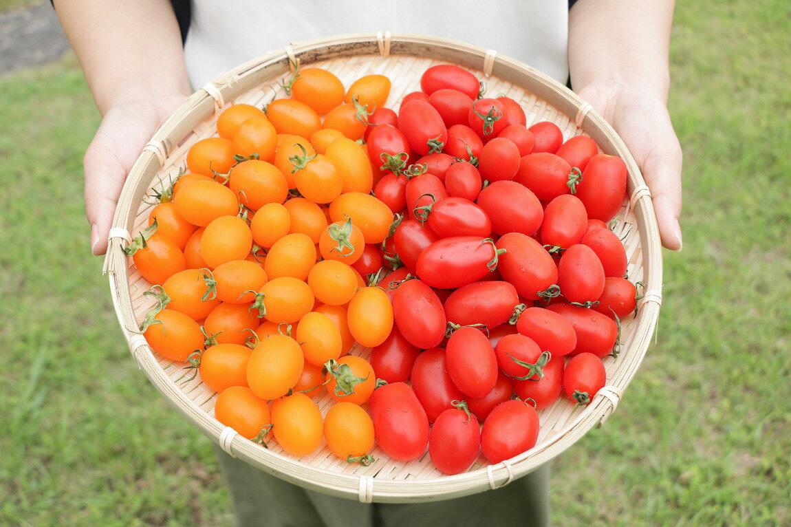 【ふるさと納税】【2019年先行予約】亜熱帯トマト「野生の証明」