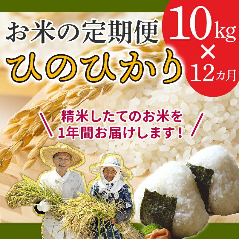 【ふるさと納税】【お米の定期便】鹿児島県産ひのひかり10kg×12か月!