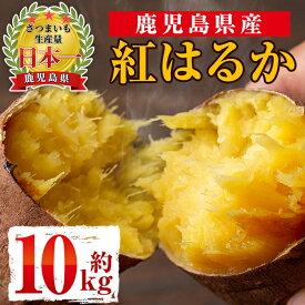 【ふるさと納税】《期間限定》鹿児島県産紅はるか生芋(10kg)甘くて美味しいお芋、さつまいもをお届け!【弐番屋】