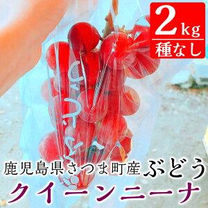【ふるさと納税】<ご予約受付中!2020年8月〜10月の間に発送予定>鹿児島県さつま町産のぶどう♪クイーンニーナ(2kg)大粒で酸味が少なく甘いブドウ【大蔵果樹園】