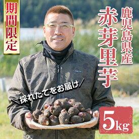 【ふるさと納税】《期間限定》鹿児島県さつま町産 赤芽里芋(5kg)採れたて旬の里いもをお届けします【かじや農産】