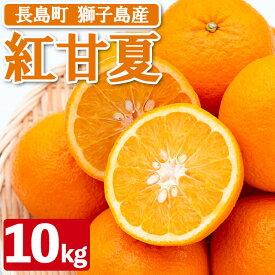 【ふるさと納税】BLUE獅子島柑橘組合の紅甘夏_blue-411