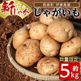 【ふるさと納税】伊唐島産 いからんじゃがいも約5kg_horino-432