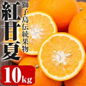 【ふるさと納税】獅子島伝統果物 紅甘夏_ikemoto-403