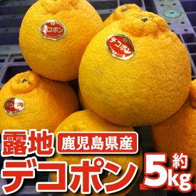 【ふるさと納税】露地デコポン5kg_ja-646