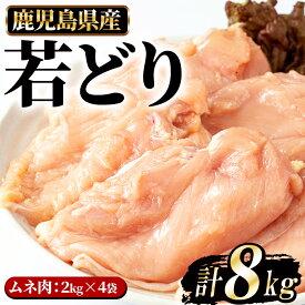 【ふるさと納税】まつぼっくり 若どりムネ肉8kg_ matu-539