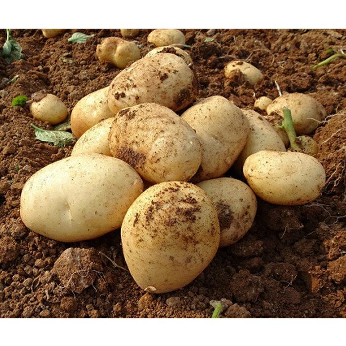 【ふるさと納税】eguchi-1長島のミネラル栽培ジャガイモ10kg