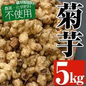 【ふるさと納税】【栽培期間中農薬化学肥料不使用】菊芋5kg【雲月農園】