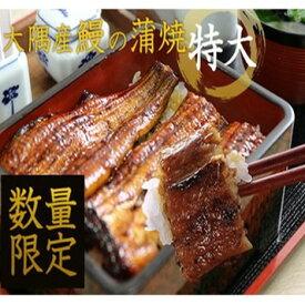 【ふるさと納税】【45355】大隅産 鰻の蒲焼 特大サイズ×6尾