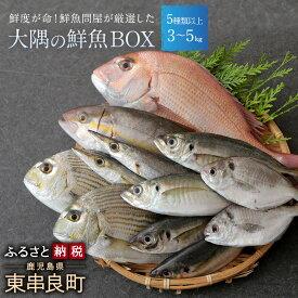 【ふるさと納税】【25411】鮮度が命!鮮魚問屋が厳選した『大隅の鮮魚BOX』