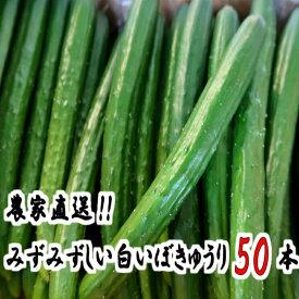 【ふるさと納税】【10604】名産地の農家直送!みずみずしい白いぼきゅうり 50本