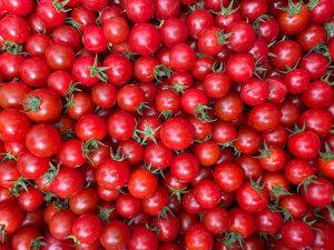 【ふるさと納税】喜界島産ミニトマト 1kg【まぁむんFARM】
